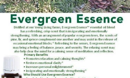 Evergreen Essence!!
