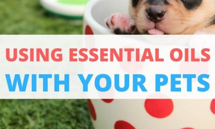 Safely Using Essential Oils With Animals!