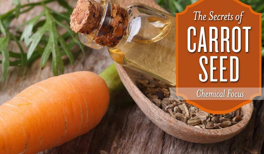 Did you know this about Carrot Seed Oil?