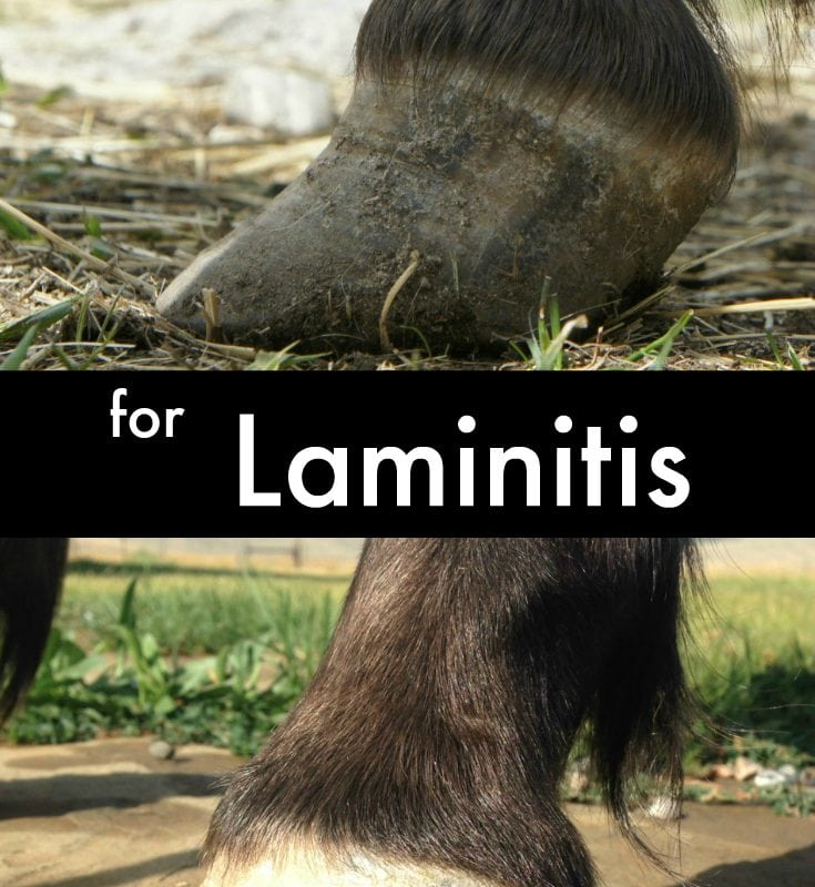 Top oils to help heal your best friends Laminitis