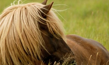 Stop! Read before you turn your horse out to pasture this spring!