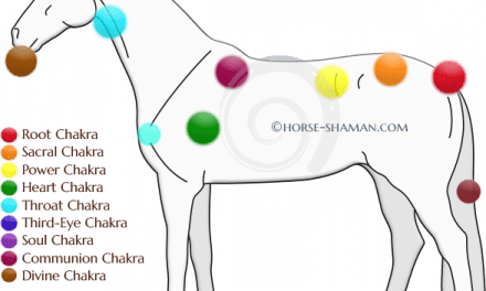 Did you forget about your horses Chakras?